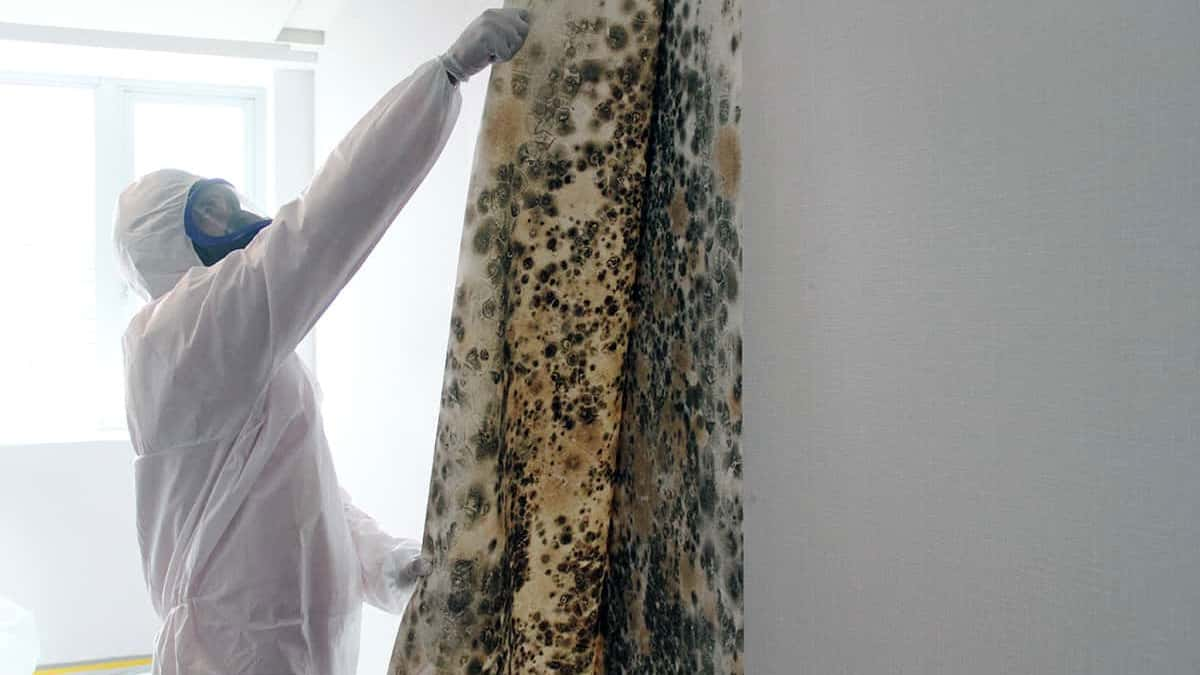 Debunking Myths About Mould Removal Mid North Coast