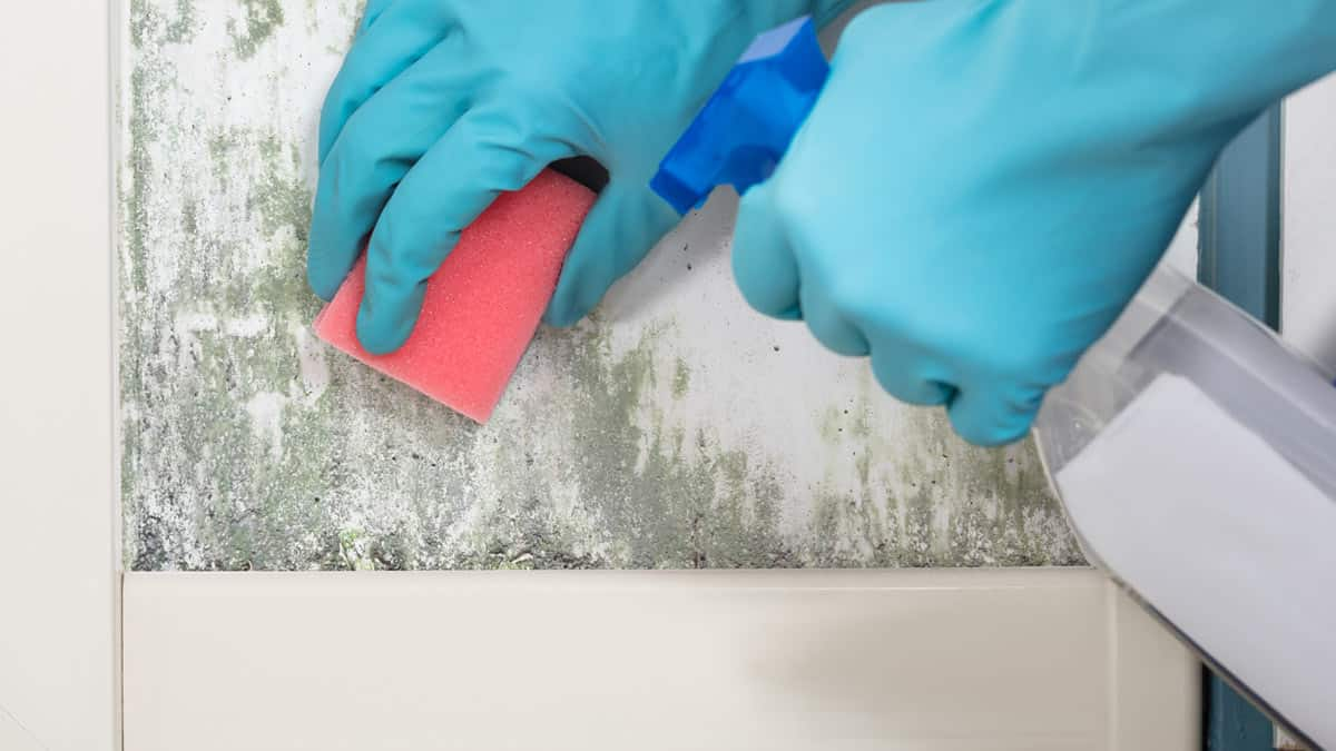 Mould Control Products Mid North Coast